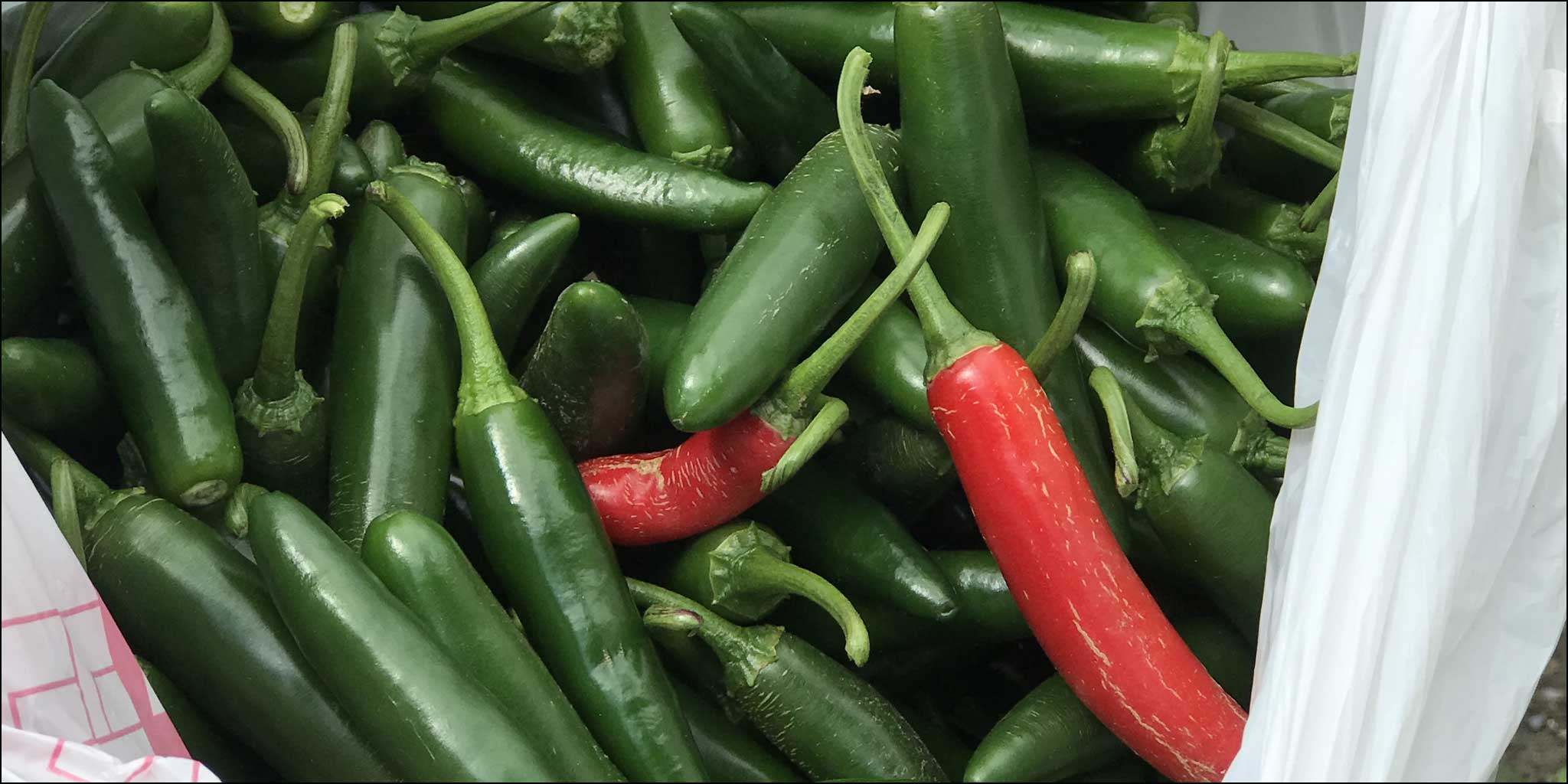 News 12 Visits Lehman's Edible Garden and Pepper Patch